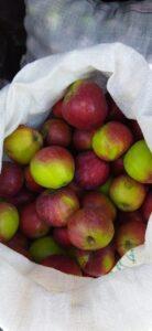 Яблоки урожай 2021